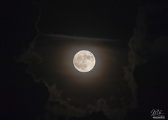 Harvest Full Moon (Michael Seeley) Tags: 2018 florida fullharvestmoon fullmoon harvestmoon mikeseeley moon moonphases moonpictures satellitebeach dearmoon