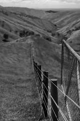 Fenceline Mono (Lyndon (NZ)) Tags: landscape ilce7m2 sony 2018 monochrome wairarapa castlepoint blackandwhite rural farm leadinglines fence gate pastoral