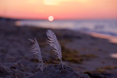 remnants (proefdier) Tags: balticsea beach child family feather granddaughter grandma holiday love meer memories ostsee outdoor sand strand summer sun sunset vacation water mood stilllife feder