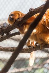 180323 National Zoological Park-05.jpg (Bruce Batten) Tags: animals businessresearchtrips locations mammals nationalzoologicalpark occasions reflections subjects terrestrial trips usa vertebrates washingtondc zoos