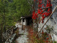 entrance to the gave (panoskaralis) Tags: forest oldhouses oldbuildings old abandoned flower wildflowers red green pozar mountains mountainview mountainside path footpath macedonia greece greek hellas hellenic outdoor landscape nikonb700 nikon nikoncoolpixb700 macedoniagreece