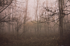 (Jessica Kowalczyk) Tags: canon winter fall autumn forest woods trees landscape desolate dead foliage fog branches leaves ground sky blur depth no person nature illinois red mist tree grass wood