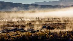 Horses in Morning Mist (Jeffrey Sullivan) Tags: horse morning fog long valley eastern sierra landscape nature western travel photography california usa canon 5d mark iv photo copyright 2018 jeff sullivan october mammoth lakes hdr photomatix