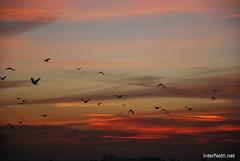 Небо України 36 InterNetri.Net Ukraine (InterNetri) Tags: небо sky птахи україна ukraine європа европа europe internetri qntm
