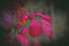 Tree flowers .. (Julie Greg) Tags: tree nautre nature colours canon park details leaf leafs natural flower