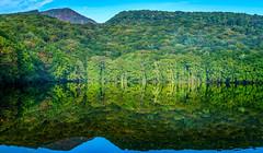 Green sparkle (KTK's) Tags: 十和田市 青森県 日本 jp aomori japan pond mountain tree reflection tsutanuma