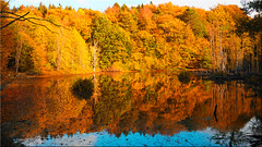 Autumn magic on fairytale pond (Ostseetroll) Tags: deu deutschland geo:lat=5403050614 geo:lon=1070568692 geotagged klingberg scharbeutz schleswigholstein herbst farben zauber teich autumn magic fairytale pond spiegelungen reflections olympus em10markii