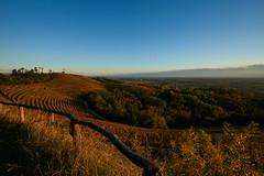 Il vigneto (paolo-p) Tags: vigneti wineyards linee lines savorgnanodeltorre povoletto