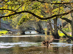 Autumn-River (johnb/Derbys/UK) Tags: autumnriver autumn seasons fall walk wet water riverdove derbyshireuk dovedale colour countryside trees nice nature england old history unspoilt unchanged myworld