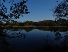 Blue reflection (Phil Gayton) Tags: water field grass tree sky reflection snipe island river dart totnes devon uk