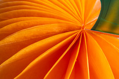 29/31: Trick or treat (judi may) Tags: macromonday macro macromondays trickortreat pumpkin orange october2018amonthin31pictures abstract abstraction closeup pattern canon5d