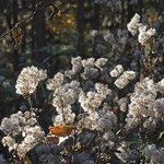 autumn melange thumbnail