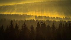 forest series #156 (Stefan A. Schmidt) Tags: warstein nordrheinwestfalen deutschland de sunbeam landscape fog dust mist ethereal