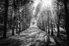 Humlegård (anderswetterstam) Tags: fall nature park parks seasons autumn trees blackandwhite monochrome sunlight sunshine