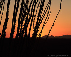Dusk and Ocotillo, Pima County, AZ (4 Corners Photo) Tags: 4cornersphoto arizona color dusk fouquieriasplendens landscape mountains nature northamerica ocotillo outdoor pimacounty rural saguaronationalpark scenery sky sonorandesert summer sunset tucsonmountains unitedstates weather tucson us desert