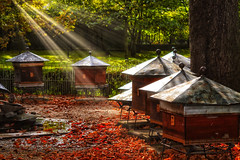 Beehives (stephaneblaisphoto) Tags: bees autumn beauty nature beehives change day food drink forest honey land leaf no people outdoors plant part sunlight tranquil scene tranquility tree trunk wood material
