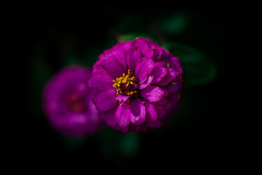 Flowers ... (Julie Greg) Tags: light nature nautre flower flowers colours details garden england canon purple yellow green