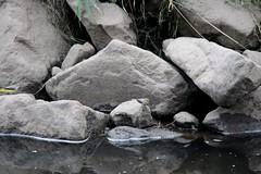 Img_3652 (steven.heywood) Tags: greywagtail wagtail
