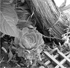 Cenicero. Ashtray. (Esetoscano) Tags: cenicero ashtray cigarrillos cigarrettes tallo stem hojas feules bw bn byn monocromo monochrome
