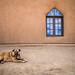 dog and church, Taos Pueblo