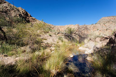 Water in the Desert _5732-2 (hkoons) Tags: namibdesert namibkaukluft southernafrica waterklooftrail ababis africa african namib namibia naukluft soltaire aqueous canyon fauna grasses green landscape outdoors plants rocks shrubs stone stream water