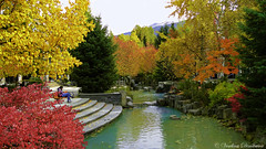Autumn in Whistler, BC Canada. (Veselina Dimitrova) Tags: photooftheday pictureoftheday picture stowns greatphotographer colours orange wellow green red mountain river water trees goodtime village nature bestphotographers photography photo bestoftheday hollyday trip vacation outside amazing colourful britishcolumbia bc whistler fall autumn