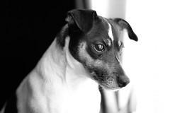 I Hate This Rain !! (Charlie Little) Tags: portrait animal dog mood bella 50mmf18 fullframe sonya7ii bw blackandwhite