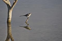Parallel worlds (R.D. Gallardo) Tags: parallel universes universos paralelos bird vitoria salburua pajaro animal lago lake agua water canon eos 6d eos6d sigma 150500
