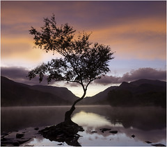 Cometh the Dawn (Charles Connor) Tags: llynpadarn llanberis northwales dawn dawnlight dramaticskies skies colourfulskies colour colourofnature pink blue water mountains lonetree tree landscapephotography landscape pastelcolours predawn canondslr