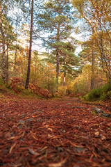 The Forest Floor (rattigan_tim) Tags: migdalescotland scenery beautifulreflectionsautumn autumn carpetofleaves leaves brown fall