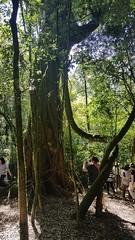 Slow Tour Brasil Roteiro Igrejinha RS (67) (slowtourbrasil) Tags: sustentabilidade passeios natureza roteiros experiência slow tour brasil nature