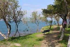 Have a seat! (Argyro Poursanidou) Tags: landscape park tree bench nature sea chalkida chalcis greece