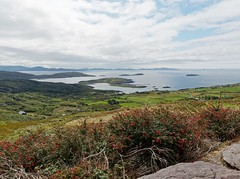 The Colors of County Kerry (Rev.Gregory) Tags: scarriff inn ring kerry ringofkerry scenic overlook view vista panorama islands coast wildatlanticway abbey moylaun landscape clouds plants grass green coastline ocean water dursey crag craggy ireland trafalgar simplytrafalgar
