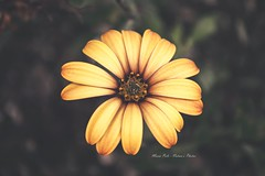 (Maria Polo Photography) Tags: flower