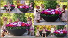 Kindergartenkinder ... blumiger Eintopf ... (Kindergartenkinder 2018) Tags: gruga park essen herbst alpenveilchen kindergartenkinder annemoni milina sanrike tivi