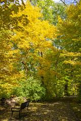 fall 2018-10 (kelsey.hurm) Tags: indiana fall whiteriver nature