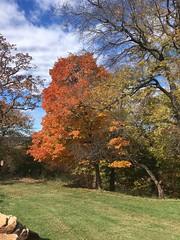 20181106-112358-1 (alnbbates) Tags: november2018 gilcrease autumncolor fallcolor