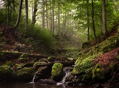 In the forest (andriy.8) Tags: landscape brook creek forest ukraine carpathians