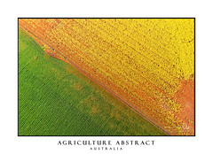 Canola Wheat abstract aerial (sugarbellaleah) Tags: farm farming aerial centralwest australia field agriculture canola wheat cropsyellow green farmland rural food growing diagonal abstract colour background copyspace nature earth vibrant vivid flowers spring newsouthwales au