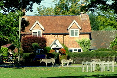 New Forest Cottage (Hythe Eye) Tags: newforest hampshire animals bramshaw donkeys cottage