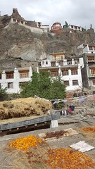 Drying apricots on the roof, Wanla Monastery above