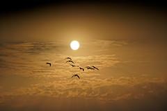 Israel (Hemo Kerem) Tags: israel a7rm2 a7rii nikon200mmf4ai nikkor200mmf4ai ai200mmf4 ai4200 200mm manualfocus mf nikon nikkor sony sonya7rm2 ilce7rm2 alpha naturereserve reserve sunset birds