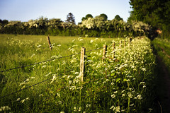 Fencepost (Boganeer) Tags: stokebynayland field pasture fence hedge flowers grass suffolk eastanglia england unitedkingdom canon canoneos canon6d pastoral post moment soft vignette
