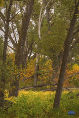 Trees, trees, trees (TheArtOfPhotographyByLouisRuth) Tags: treesautumncolorlandscape tree park forest grass wood autofocuslevel1 artofimages detail details sharp shadow treemendous treesarelife bunnyanimalwildlifeforesttreeslightmorninglightcutecuddleybunniesrabbitpetfurry branches nikond810 autumnleaveslandscapeslandscapefallstreecolors colorful sellmyphotos sellyourart autofocuslevel4 autofocuslevel5 autofocuslevel6 autofocuslevel7 autofocuslevel8 autofocuslevel9 flickrsocial flickrglobal prime primelenses prime24mm dynamicrange dynamic detailed vivid autumn bandhuamar afs nikkor 35mm f18g ed nikkor35mmf18ged thisshouldbeapostcard fantastictreephotography flickrawards 85mm 85f18 ilovemynikon d810 litwell wow flickrphotosforsale photosale louisruth art artist superiorcolors nikon85mmf18 perspective view treecontest bookcover bookcoverart artistic viewpoint portraiture bookcoverartflickr