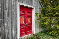 Red Door (gabi-h) Tags: reddoor gabih abandonedhouse princeedwardcounty wood cedars grass trees oncewashome paintitblack