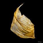 Dried Hosta Leaf - Feuille d'hosta séchée thumbnail