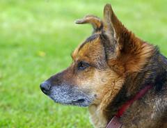 Lisa (anubishubi) Tags: haustier pet hund dog mischling säuger säugetier pentaxk100d