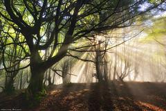Early autumn party (Hector Prada) Tags: autumn otoño forest bosque light luz shadows sombras sunlight mist bruma fog niebla sun sol morning mood moss nature naturaleza dreamy paísvasco basquecountry