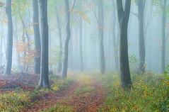 Autumn Mist (jactoll) Tags: cutsdean gloucestershire cotswolds autumn autumnal mist misty woodland trees light mood landscape sony a7iii 70200mmf4 jactoll