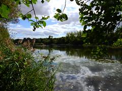 DSCN5172. (jeanchristophelenglet) Tags: santeuilfranceétangdevallière nature natureza paysage landscape paisagem reflet reflection reflexo
